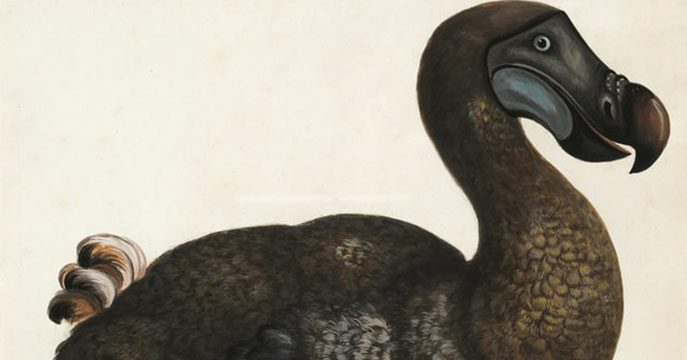 It's time for political welfare to go the way of the dodo bird